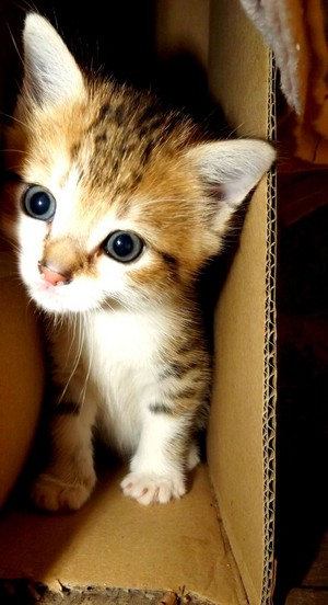 cute and shy kittens