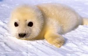 cute जानवर