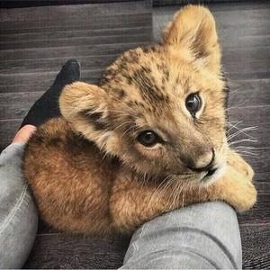 cute Haiwan