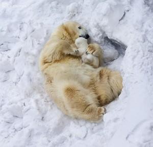 cute binatang
