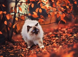 cute autumn cat🌹♥