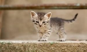 cute baby Котята