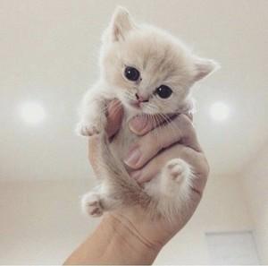 cute baby gatitos