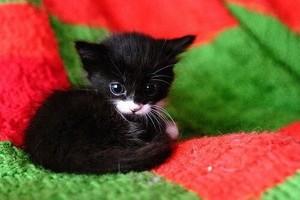 cute baby gatinhos