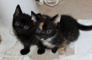 cute baby chatons