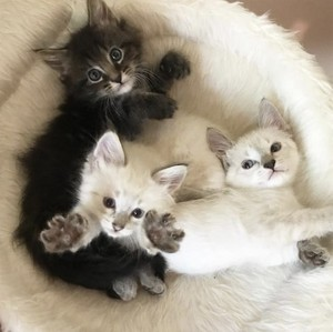 cute baby mga kuting