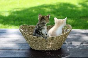 cute baby Kätzchen
