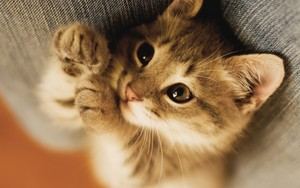 cute baby mèo con