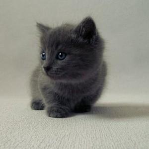 cute baby anak kucing