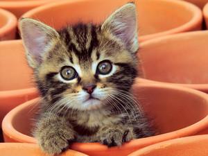 cute baby बिल्ली के बच्चे