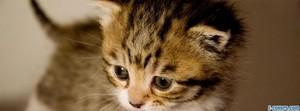 cute baby 小猫