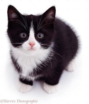 cute black and white gatinhos