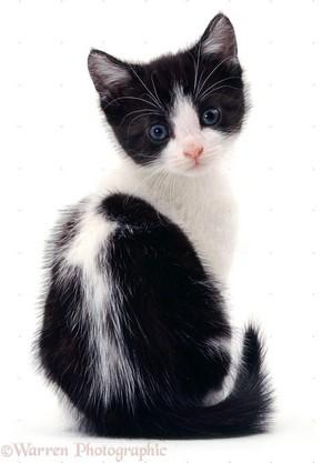 cute black and white gatitos