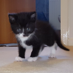 cute black and white chatons