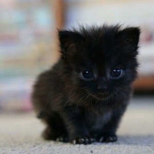 cute black gattini