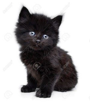 cute black gatitos