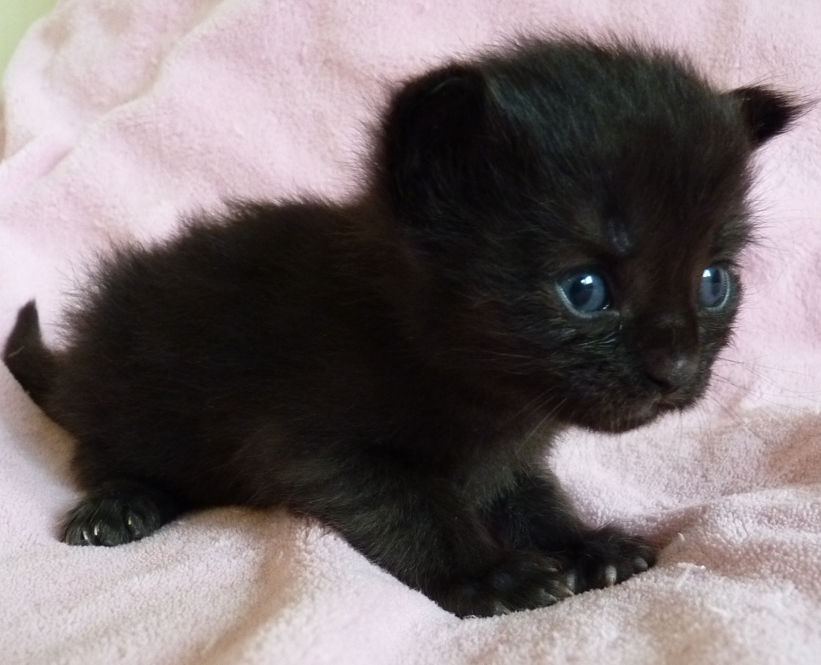 cute black kittens