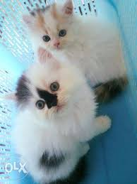 cute,friendly kittens