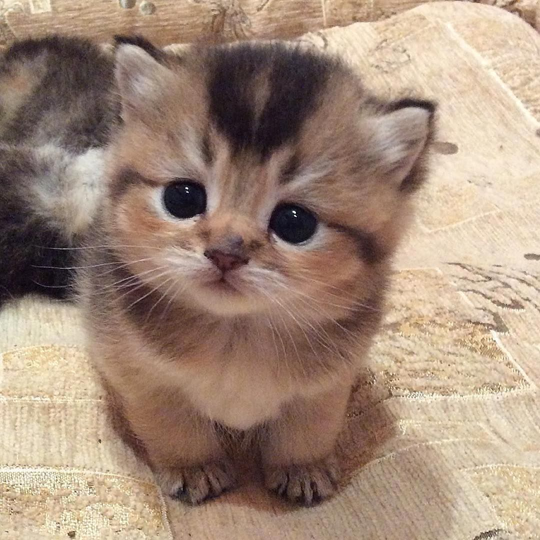 gatinhos fofos