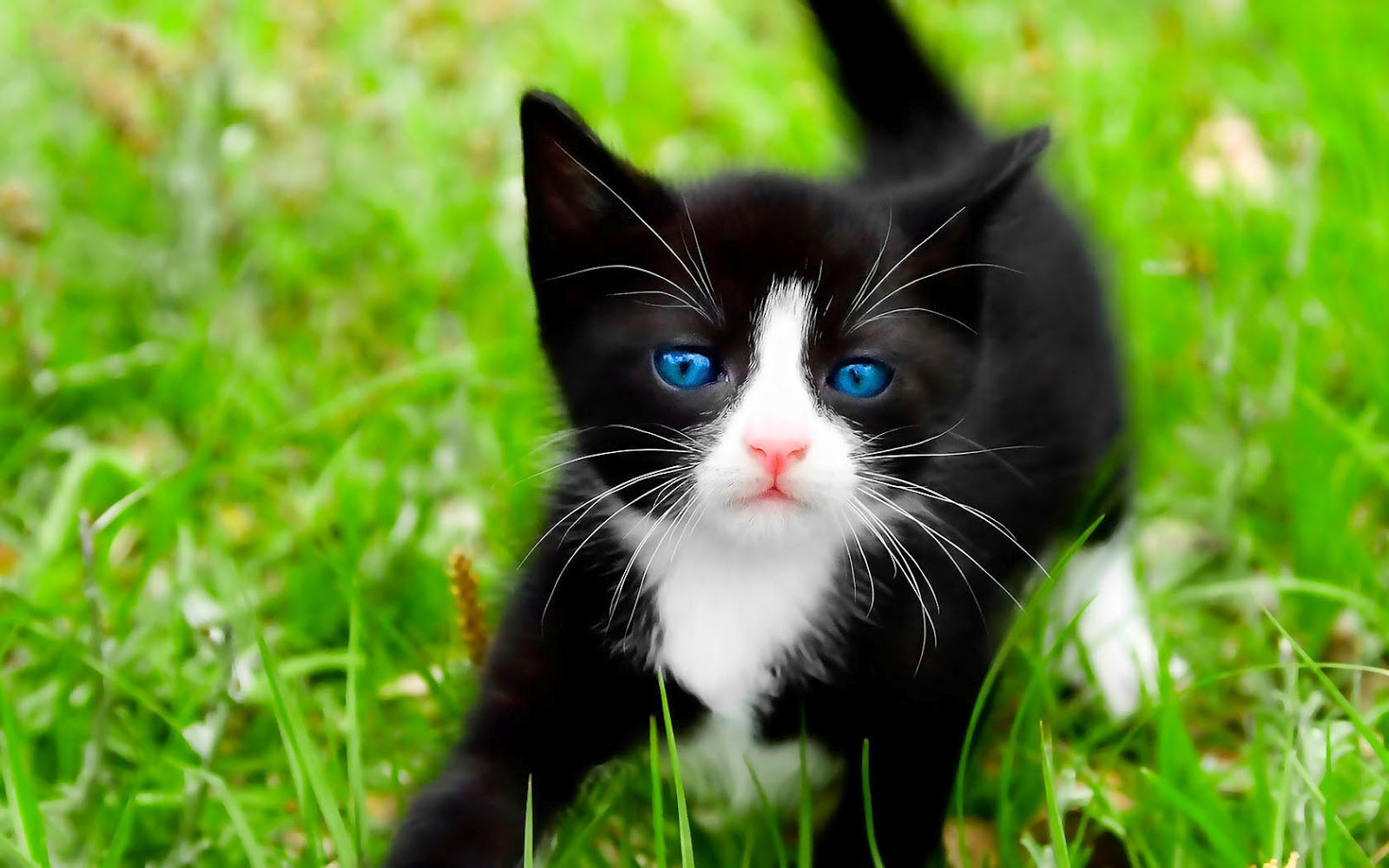 Cute Kittens Images Cute Kittens Hd Wallpaper And Background Photos