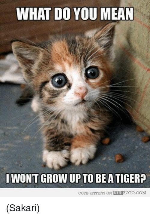 Cute Kitty Memes Anak Kucing Cute Foto 41532554 Fanpop Page 10