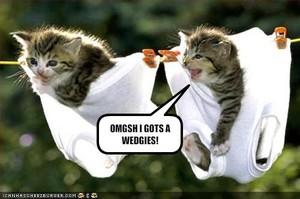 cute kitty memes