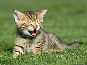cute kitty yawns