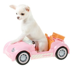 cute щенок in car