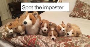 cute chiot memes