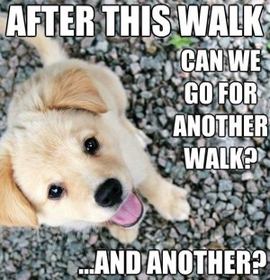 cute cún yêu, con chó con memes