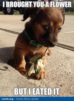 cute anjing, anak anjing memes