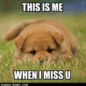 cute щенок memes