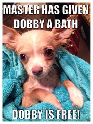 cute perrito, cachorro memes