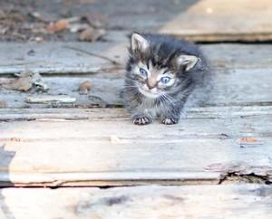 cute tiny Kätzchen