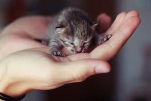 cute tiny 子猫