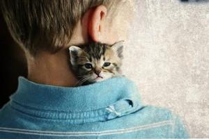 cute tiny Котята