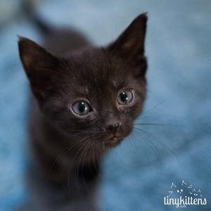 cute tiny mèo con