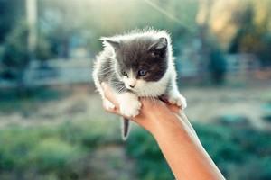 cute tiny kittens