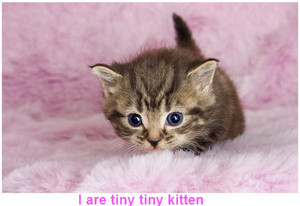 cute tiny kittens