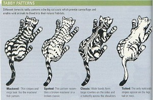 Tabby Patterns