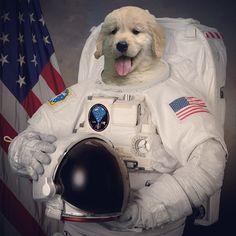 astronaut puppy