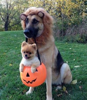 Anjing in Halloween costumes