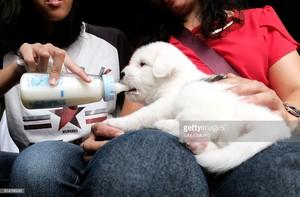 feeding the perrito, cachorro