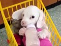 feeding the puppy - cute-puppies photo