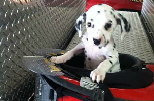 fire station dogs