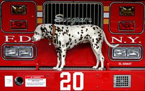 火, 消防 station 狗