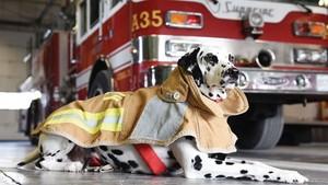 api station anjing