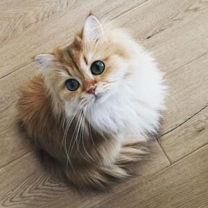 fluffy felines