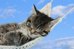 hammock catnap