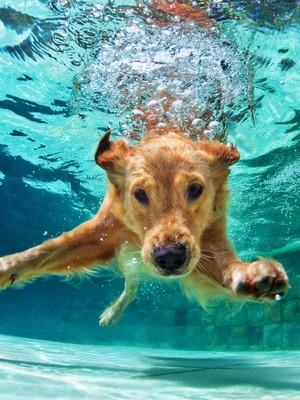happy national dog siku